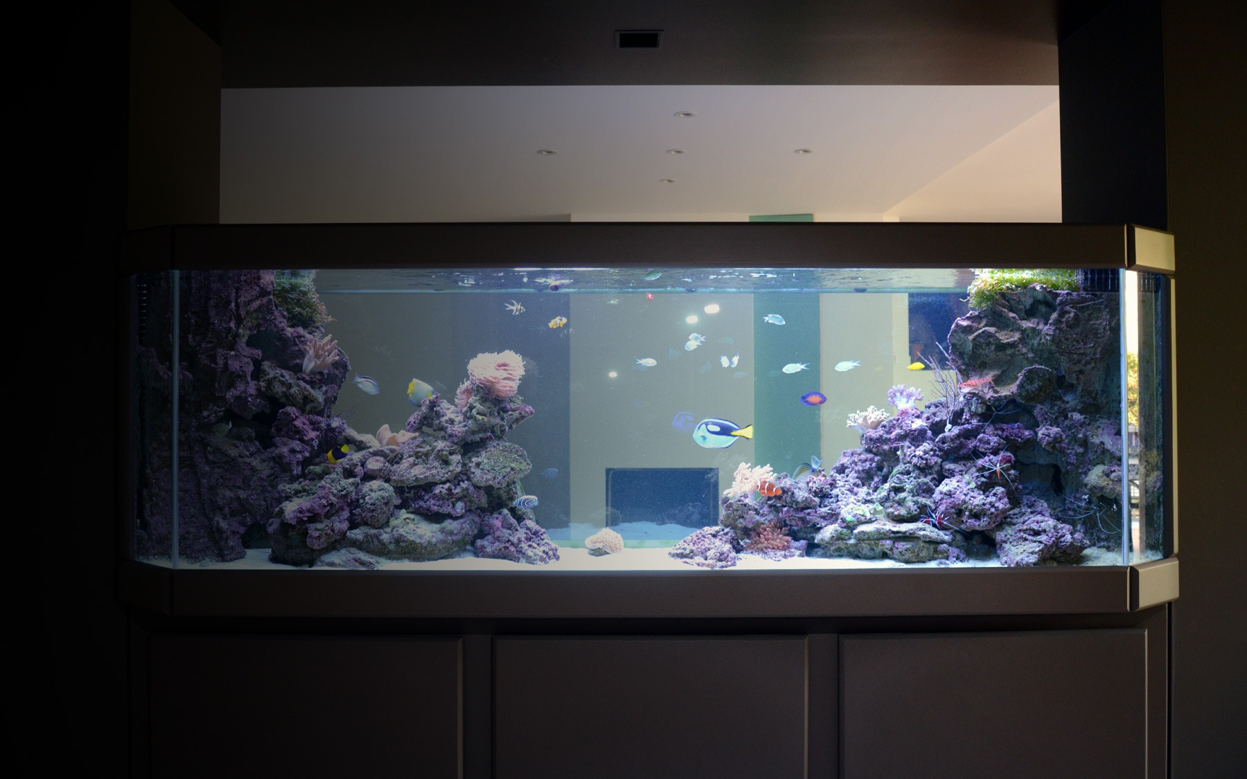 Aquarium sur mesure en s paration oc an d 39 interieur for Aquarium interieur