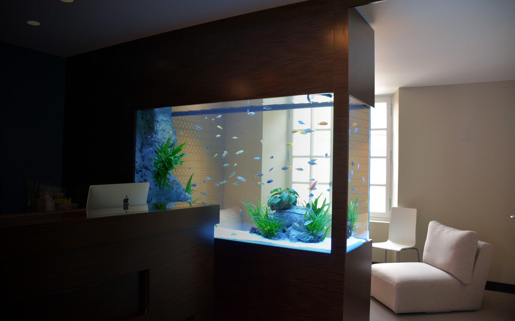 Aquarium sur mesure dans un cabinet dentaire oc an d for Aquarium interieur